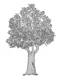 Biotopbaum-Anwärter