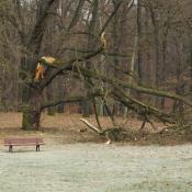 Astbruch im Glienicker Park © N. A. Klöhn