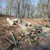 Zersägte Buchen im Glienicker Park: Hier gäbe es sinnvolle Alternativen zur Erhaltung von Biotopholz (© N. A. Klöhn)