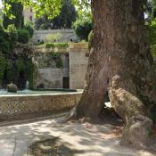 Biotopholz - auch im Park der Villa D'este nahe Rom. © N. A. Klöhn