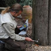 Hochempfindlicher Microhammer für Schallimpulsmessungen - hier an einer Zypresse. © N. A. Klöhn