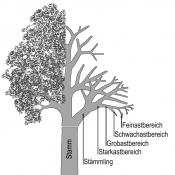 Schematische Darstellung der Baumbestandteile und Erläuterung der im Leitfaden verwendeten Fachbegriffe. Zeichnung: W. Roloff