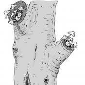 Zeichnung: W. Roloff