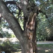 Nach einem Ausbruch ist eine ausgedehnte Holzzersetzung durch Pilze entstanden, die nun durch viele Arten besiedelt werden kann © N. A. Klöhn