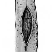 Hohle Schürfrinne. Zeichnung: W. Roloff