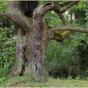 Dieser wegeferne Baumveteran durfte auch seine starken Totäste behalten. © N. A. Klöhn