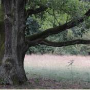 Ein stärkerer Totast über einer geschützten Wiese steht als Lebensraum zur Verfügung. © N. A. Klöhn