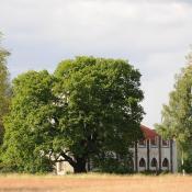 Prägende Alteiche vor der Meierei, Pfaueninsel  © N. A. Klöhn