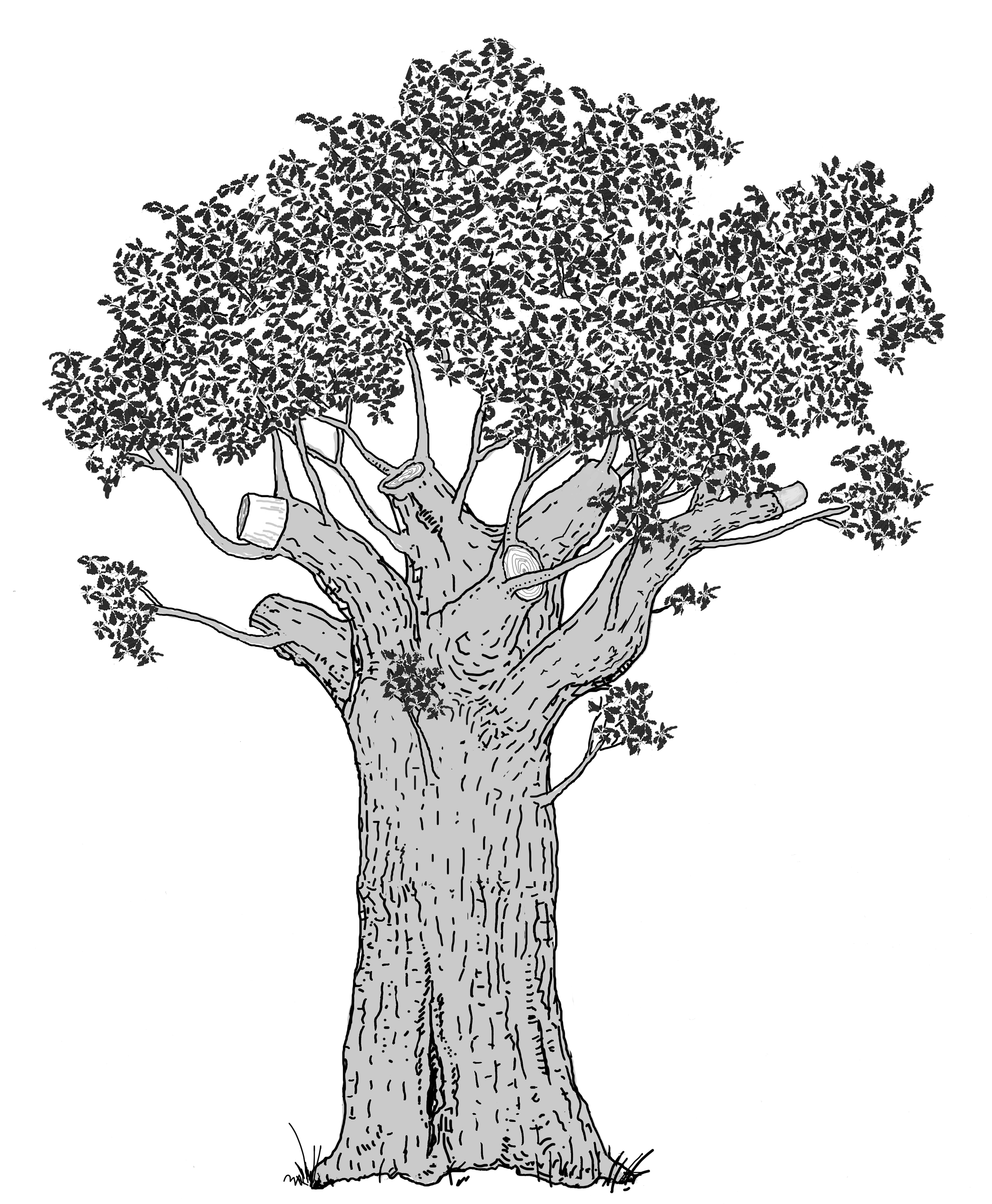 Ersatzkronenbaum durch Schnitt. Zeichnung W. Roloff