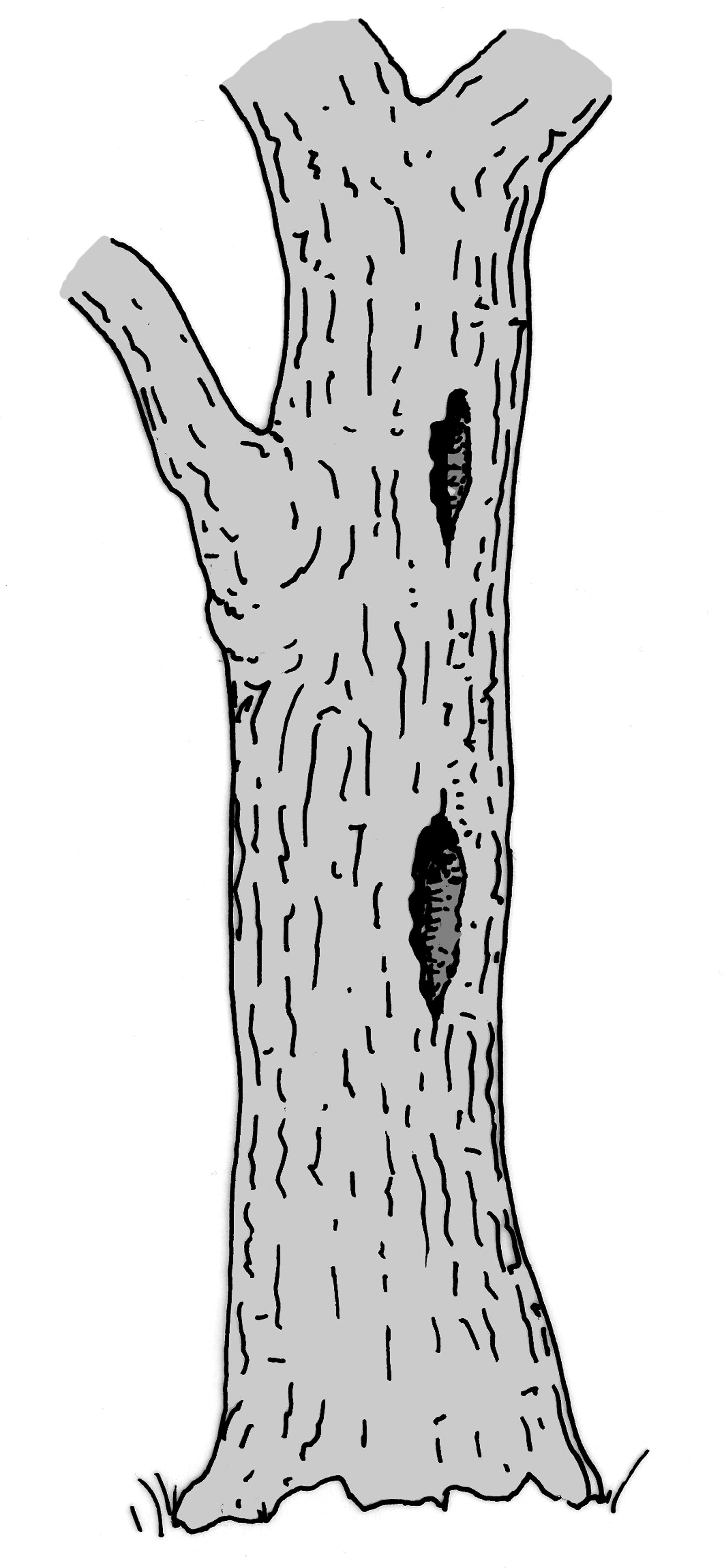Etagenhöhle. Zeichnung W. Roloff.