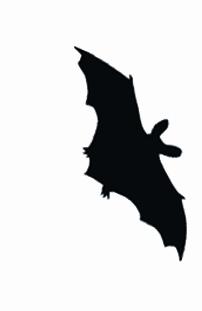 Spechthöhlen sind wichtige Baumquartiere für zahlreiche Fledermausarten. Klicken Sie auf die Abbildung für weitere Information.