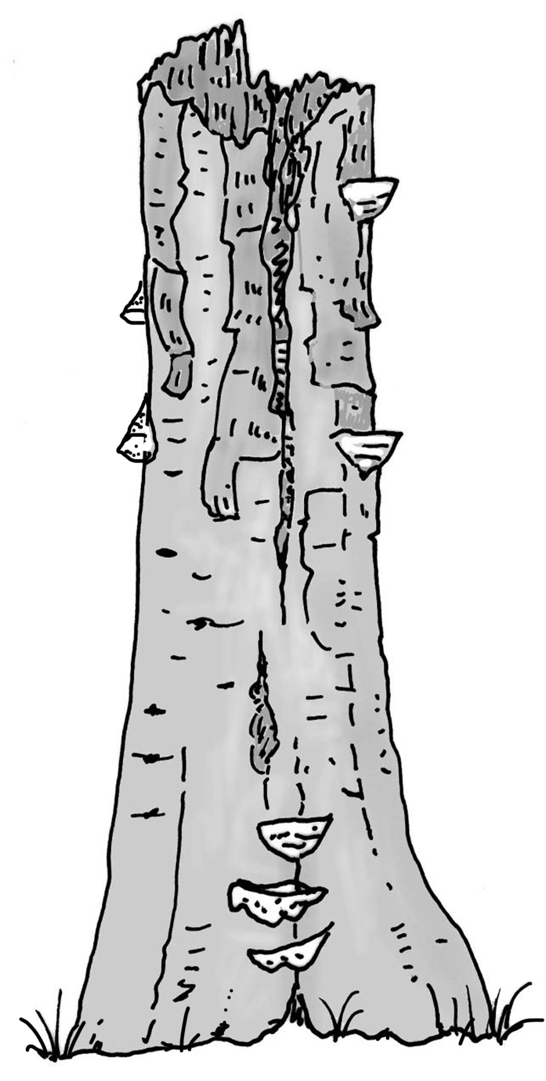 Zeichnung W. Roloff
