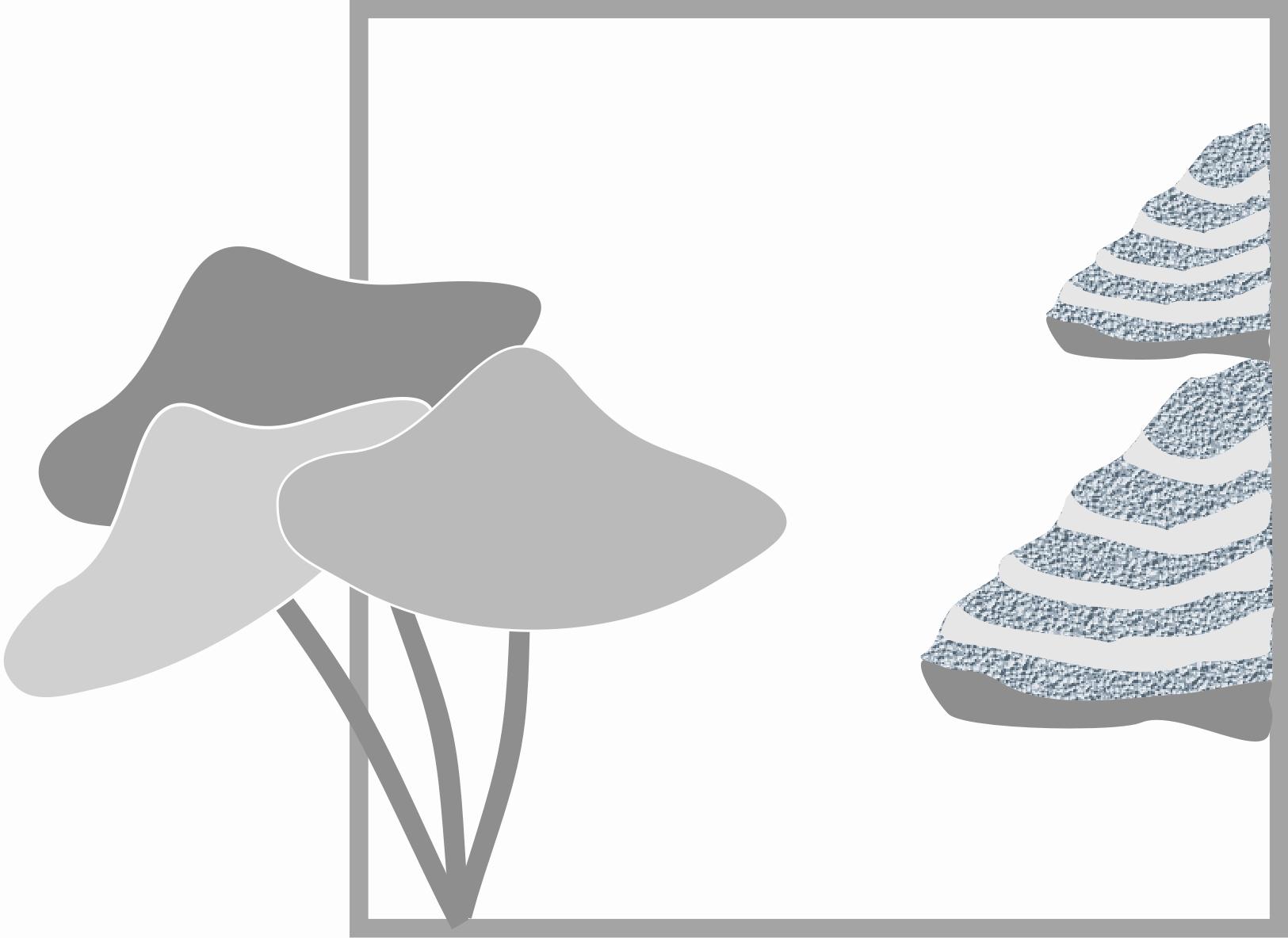 Pilze. Zeichnung W. Roloff