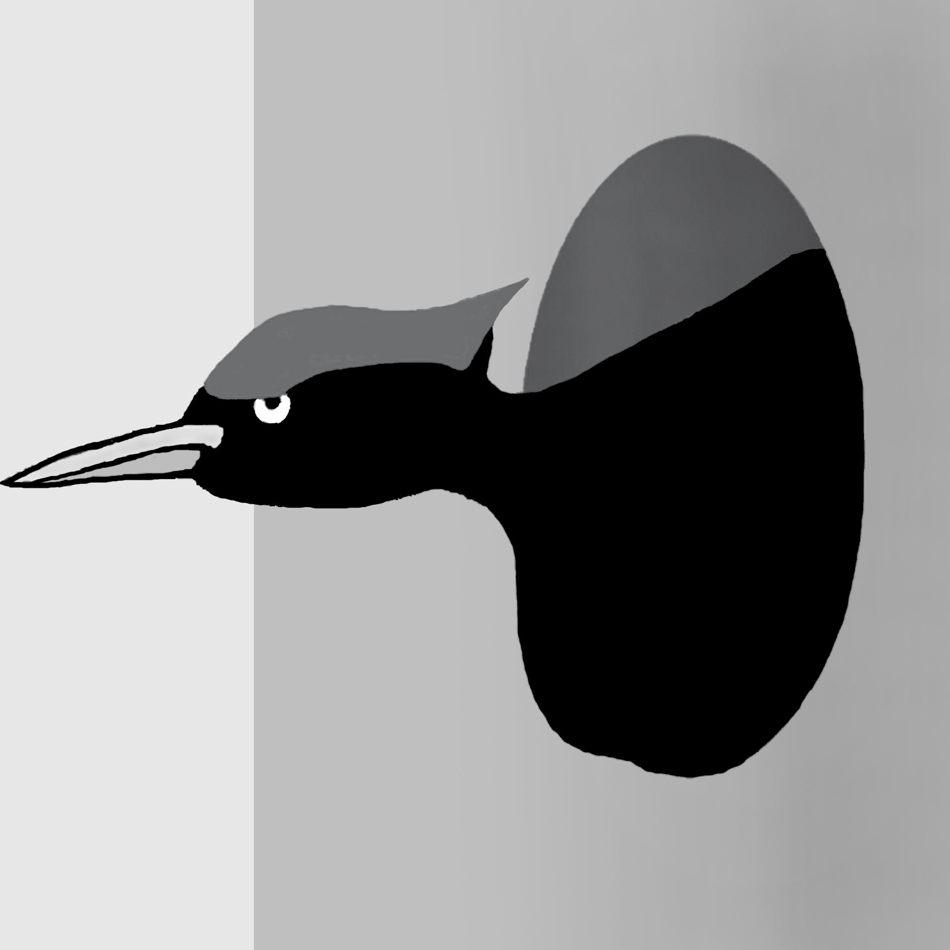 Specht. Zeichnung W. Roloff
