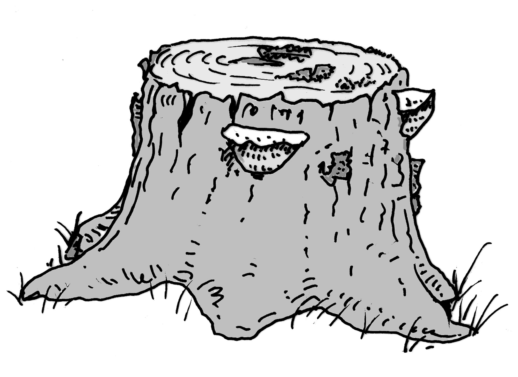 Stubben. Zeichnung W. Roloff.