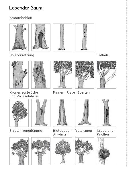 Link zur Übersichtsseite der Biotopstrukturen