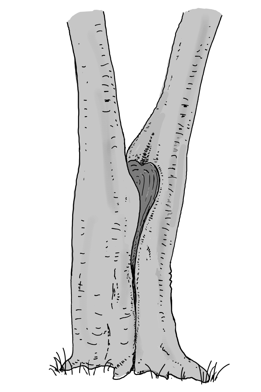 Zwieselabriss. Zeichnung W. Roloff
