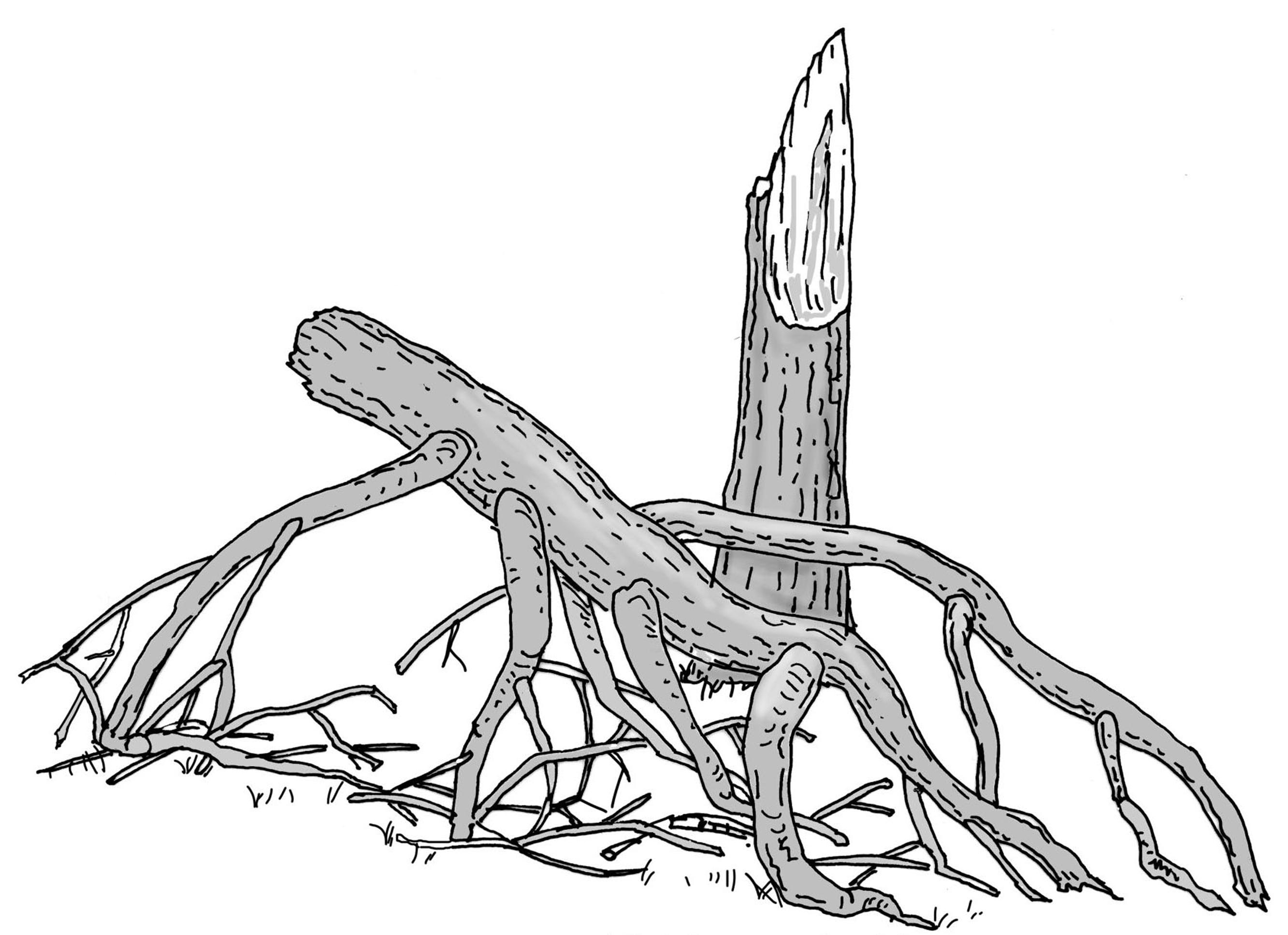 Liegende Krone. Zeichnung W. Roloff.