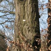 Baum mit Baumnummer im Schlosspark Buch © A. von Lührte