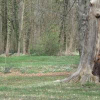 Feuchte Waldpartie mit blühenden Buschwindröschen. © B. Seitz