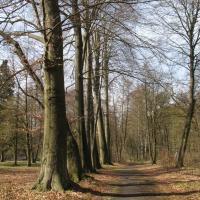 Altbuchenreihe im Holländischen Garten. © A. von Lührte