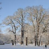 Schlosspark Buch: Winterstimmung mit alten Eichen. © N. A. Klöhn