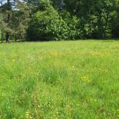 Artenreiche Feuchtwiese im Frühjahr © A. von Lührte