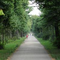 Alte Lindenallee mit Nachpflanzungen. © N. A. Klöhn