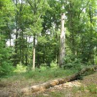 Im Osten des Parks wachsen urwaldartige Buchenwälder © A. von Lührte