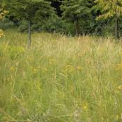 Einschüriger artenreicher Wiesenstreifen im Großen Tiergarten © M. S. Rohner