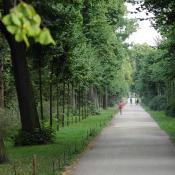 Diese Lindenallee im Schlossgarten Charlottenburg wurde einzelbaumweise ergänzt. Alte Linden wurden durch spezielle Baumpflegeschnitte eingekürzt.  © N. A. Klöhn