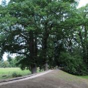 Ein spezielles Deichbauverfahren im Gartendeich Dessau-Wörlitz trägt zur Erhaltung wertvoller Bäume und der einheimischen Vegetation bei. © N. A. Klöhn