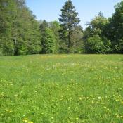 Artenreiche Feuchtwiese im Schlosspark Buch © A. von Lührte