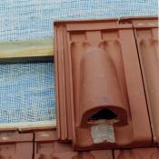 Einbau eines Fledermausniststeins bei der Dachsanierung © NABU Berlin Archiv