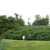 Gebüsch aus einer uralten Strauchkastanie im Muskauer Park © A. von Lührte