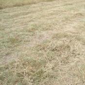 Das Mulchen von Wiesen bewirkt eine Eutrophierung und Veränderungen in der Artenzusammensetzung von ehemals nährstoffarmen Magerwiesen. © B. Seitz
