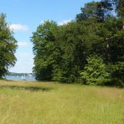 Die Kunkelwiese auf der Berliner Pfaueninsel: eine typische Magerwiese mit randlichen Silbergrasfluren ©  A. Rockinger