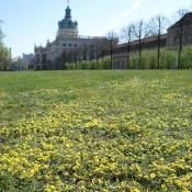 Artenreiche Parkrasen im Schlossgarten Charlottenburg, mit Potentilla incana als typische Art der Magerrasen © M. von der Lippe