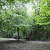 Dichte Parkforsten mit Spitzahorn prägen das Bild im Großen Tiergarten in Berlin. © N. A. Klöhn