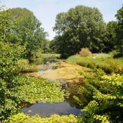 Das Venusbassin im Großen Tiergarten vor der Umgestaltung: artenreiche Uferstauden- und Schwimmblattgesellschaften prägen das Bild. © N. A. Klöhn
