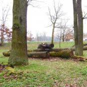 Stele zum Heldbock. Im Hintergrund abgelagerte Alteiche und aufgelichteter Eichenbestand als Lebensraum des Heldbocks. © A. von Lührte