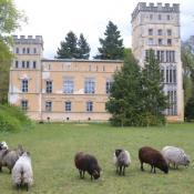Schafbeweidung vor dem Kavalierhaus. © J. Uhlig