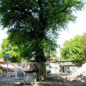 Durch eine vorausschauende Baustellensicherung konnten Wurzelschäden an der Alteiche verhindert werden © A. von Lührte