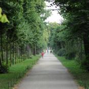Diese historische Lindenallee wurde abschnittsweise durch Jungbäume ersetzt, historische Substanz blieb erhalten. © N. A. Klöhn