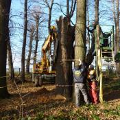 Einrichten eines Totholzlagerplatzes im Barockgarten Grossedlitz © J. Lorenz