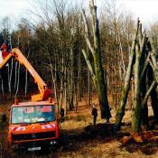 Errichtung eines Totholzlagerplatzes in der Dresdner Heide © J. Lorenz