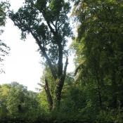Erhaltung von Biotopholz an Altbäumen © SPSG, M. Hopp