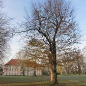Blick auf das Schloss Schönhausen © SPSG, M. Hopp