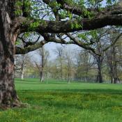 Frühlingsaspekt im Rosensteinpark © M. Sonnenfroh