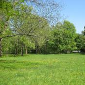 Feuchtwiese im Bucher Park - Beispiel für ein geschütztes Biotop. © A. von Lührte